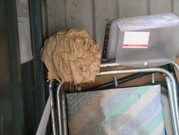 Hornets nest in storage container